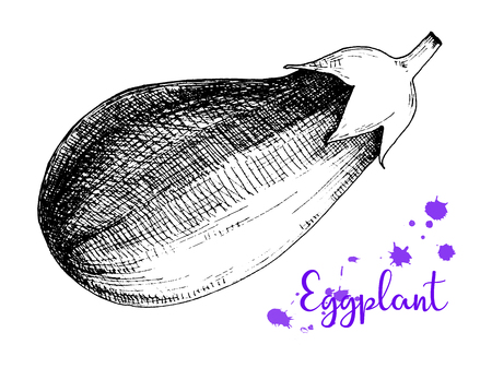 Sketch eggplant isolation on a white background. Vector Illustration