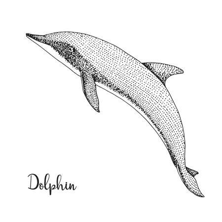 Hand drawn dolphin. Vector illustration in sketch style