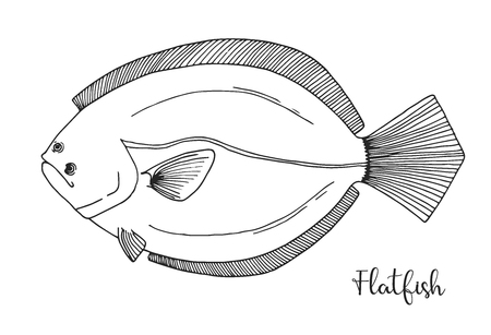 Hand drawn flatfish. Vector illustration in sketch style