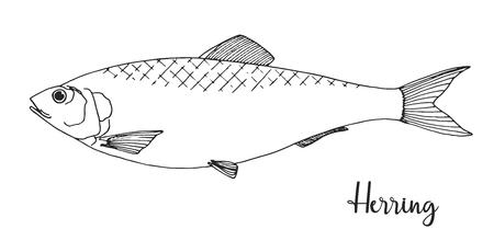 Hand drawn herring. Vector illustration in sketch style Vecteurs