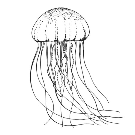 Hand drawn jellyfish. Vector illustration in sketch style Stock Illustratie
