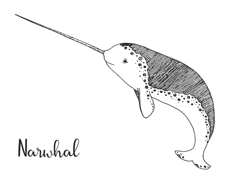 Hand drawn narwhal. Vector illustration in sketch style