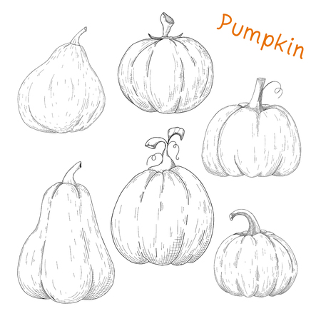 Set of pumpkins isolated on white background. Vector