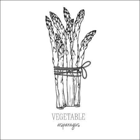 Asparagus isolated on white background. Vector illustration in sketch style.