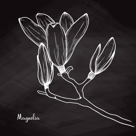 Realistic sketch of magnolia on chalk background. Vector illustration Çizim