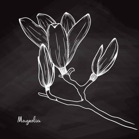 Realistic sketch of magnolia on chalk background. Vector illustration Illustration