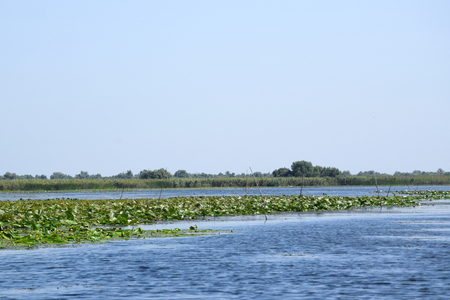 Fortuna Lake (Lacul Furtuna). Danube biosphere reserve - Danube delta, Romania.