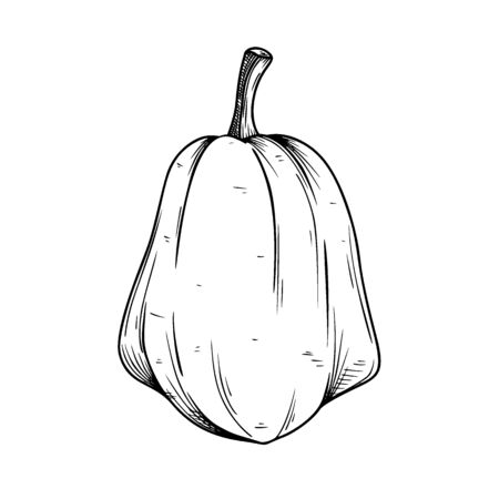 Hand drawn pumpkin isolated on white background. Vector illustration of a sketch style.
