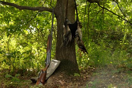 hunting, game, gun, wood