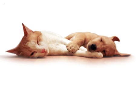 dog and cat sleep together photo