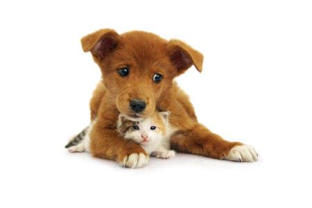 Little puppy lies with newborn kitten
