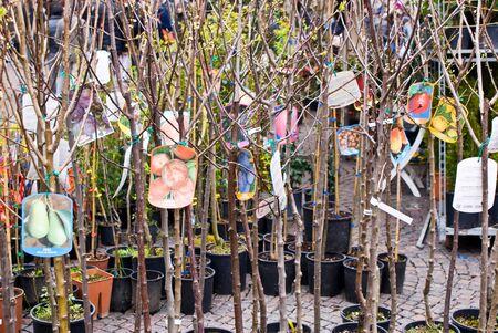 alberi da frutto: Vendita di alberi da frutto, spettacolo di orticolo