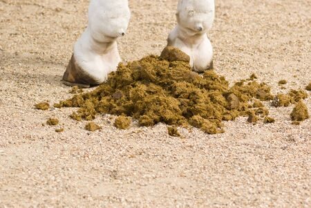 Closeup of horse feces