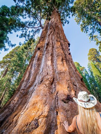 Curvy girl touches General Sherman a giant sequoia (Sequoiadendron giganteum) tree in Giant Forest of Sequoia National Park in the U.S. California. By volume, it is the largest living tree on Earth