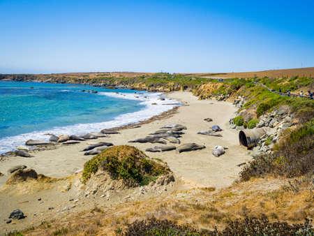 California, USA, Northern Elephant Seals (Mirounga angustirostris) in Piedras Blancas State Marine beach, at the end of the Big Sur coast, on highway 1 near San Simeon.