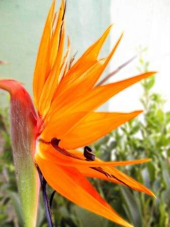 blurr: Orange flower on blurred background
