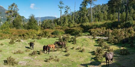 Six multicolored horses grazing on clearing in the mountain wood in sunny summer day Stock Photo
