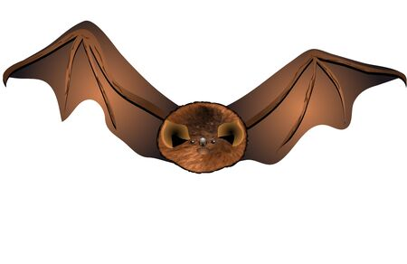 A close up of the small bat  Isolated on white  Stock Vector - 15770610
