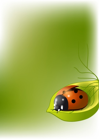 background with a ladybug on a leaf Vector