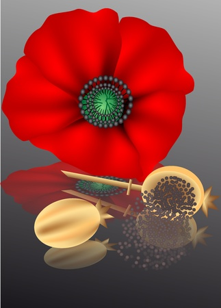 opium: poppy seeds with poppy flower on a dark background Illustration