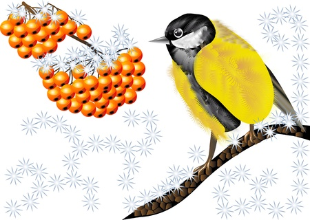 tomtit: Bird and Winter Berries  Tomtit and rowan Illustration