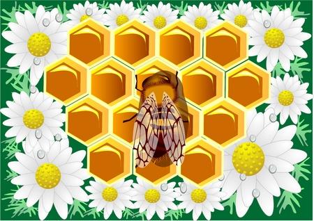 Beeswax  Macro of working bee on honeycells with chamomile