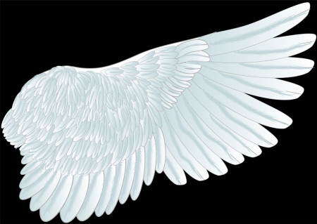 white wing isolated on th black background Vector