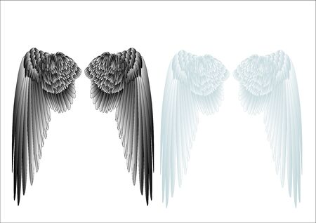 angel wing: white and black wings isolated on white