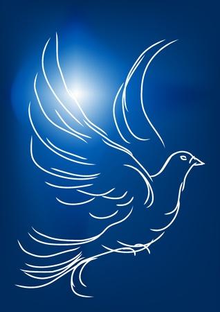 white dove: paloma blanca en un cielo azul s�mbolo de paz y amor