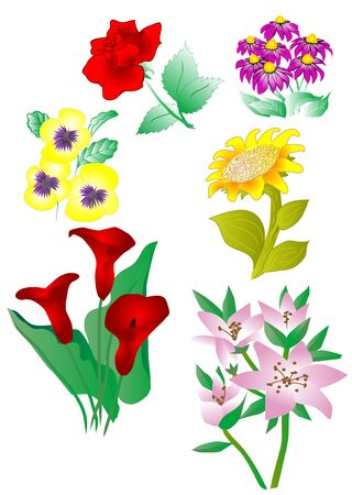 set of vector flowers isolated on white Stock Vector - 16911447