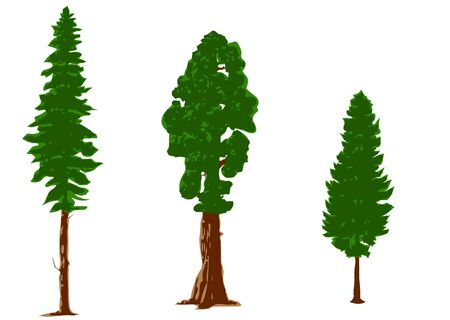 silhouettes of pine trees isolated on white Vector