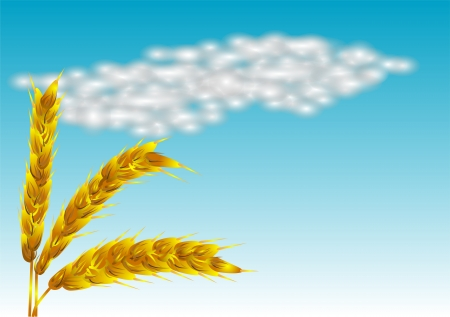 spikelets against the blue sky 10 EPS