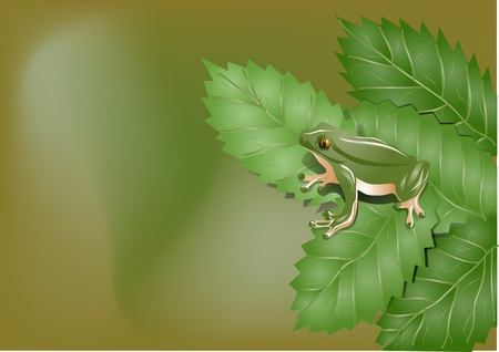 toad on the leaves Vector