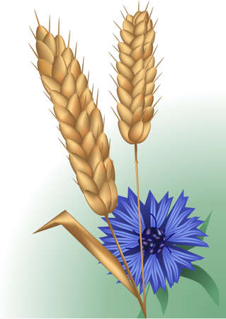 spikelets and cornflower  using mesh and gradient Stock Vector - 19898330