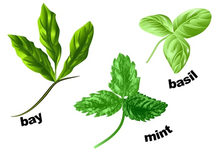 herbs mint, basil and bay isolated on a white Illustration