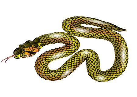 coldblooded: snake isolated on white background  Illustration