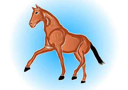 leisurely: horse walk leisurely pace