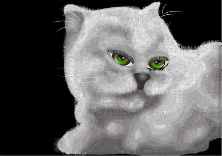 green eyes: white kitten with green eyes isolated on black
