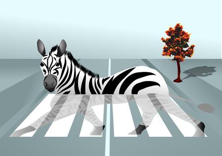 zebra crossing: cebra en la ciudad de fondo abstracto con paso de cebra Vectores