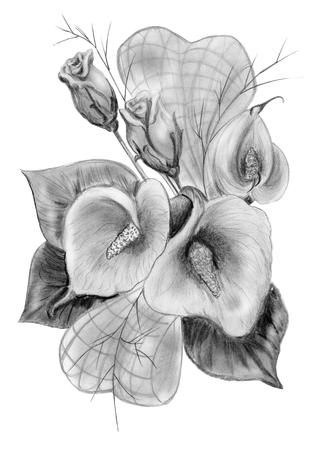 calas blancas: dibujo a l�piz de ramo de rosas y calas aisladas en blanco