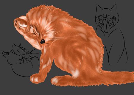 yawn: cats woke  three cats woke up and freshen yourself