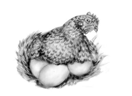 hen with eggs isolated on white  pencil drawing