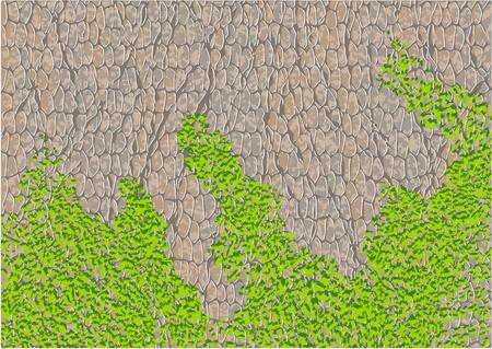 moss: tree bark with moss  1