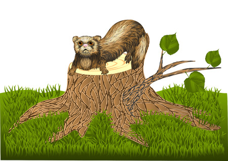 ferret on stump Illustration