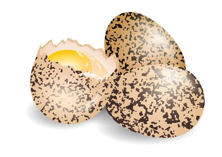quail egg on a white background  10 EPS