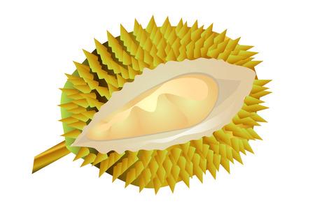 ドリアンの果実を白い背景に分離