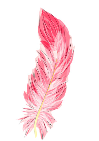 flamingo feather isolated on a white background