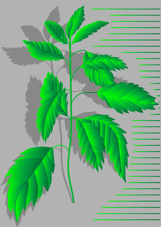 stinging: nettles  abstract plant with shadow on grey background Illustration