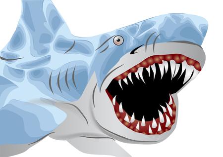 squalo bianco: grande squalo bianco isolato su sfondo bianco Vettoriali