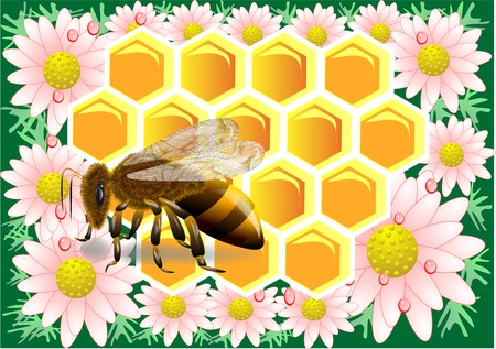 beeswax: beeswax with bee  Macro of working bee on honeycells with chamomile  Illustration